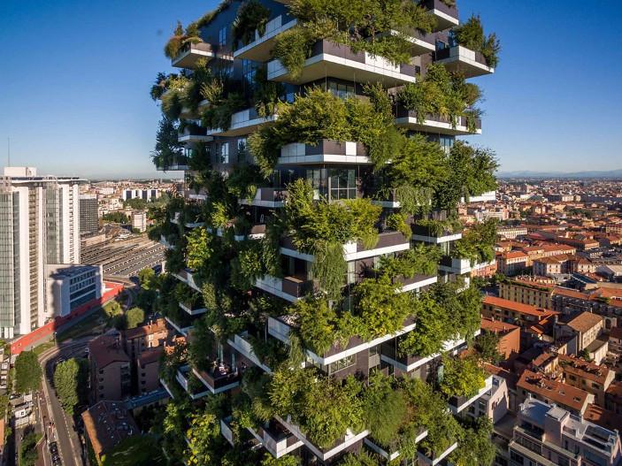 interior-dia-internacional-bosques-preservacion-crecimiento